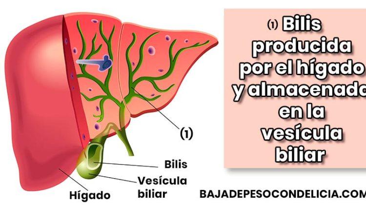 ¿Sufres problemas en el hígado?