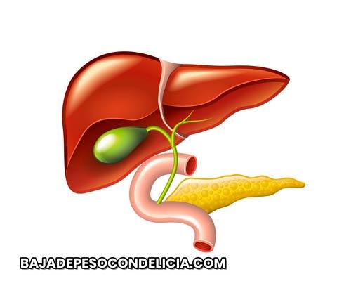 Grasa visceral afecta el funcionamiento del hígado